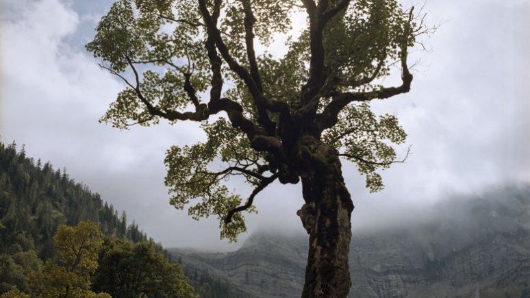 Ahornboden, © Tirol Werbung